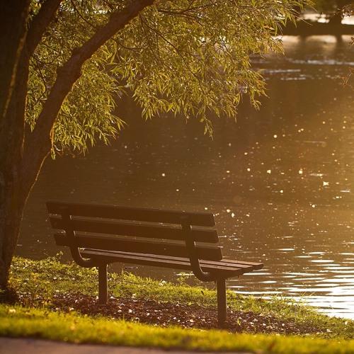 UCB News- Damaging impact of losing green spaces