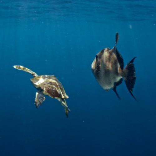 02 Canaries Undersea Creatures Ep1