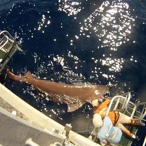 GulfCast Ep. 19 - Sharks, Sharks, and More Sharks!