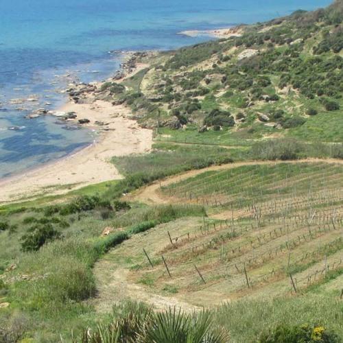 Santanella white wine made by Mandrarossa winery