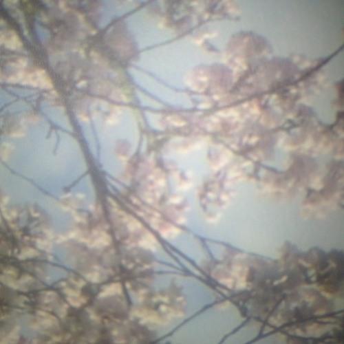 ben lodge  *--spring invitation--* 03.31.2017   (dj set)