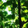 Cacife Clandestino - Beija Flor (Clipe Oficial)