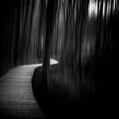 Path In Night