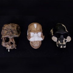 Know Your Neanderthals, with Natalia Reagan