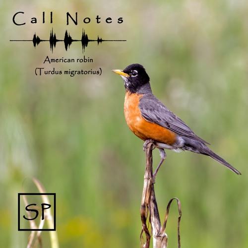 'Call Notes' Episodio 2 -- Robin Americano (En Español)