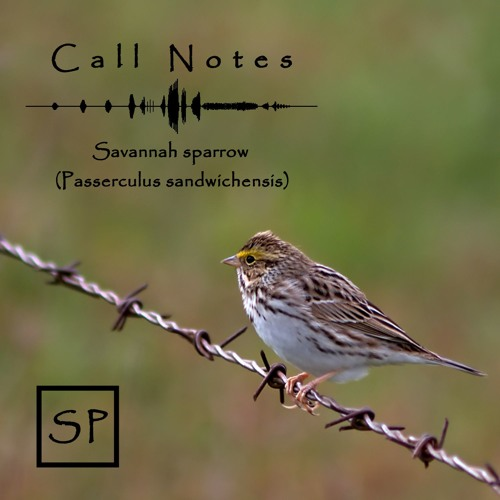 Call Notes Episodio 1 -- Gorriones de la Sabana (En Español)