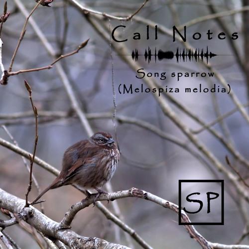 Call Notes Episodio 4 -- Gorriones de Canción (En Español)