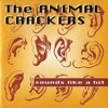She Doesn´t know what i say [The Animal Crackers → Sounds like a hit]