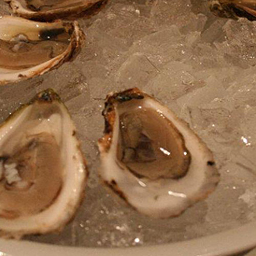 The Mighty Oysters of New York Harbor