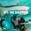 EP5 The Sharklab