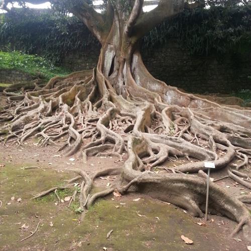 Jardim José Do Canto -Ponta Delgada Azores Abril 2017