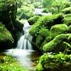 Calm By The Creek | Delta Wave Binaural Beats | Deep Rest & Sleep | Relaxation & Healing