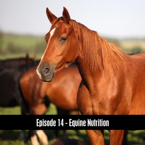 The D&B Show Episode 14 - Horse Nutrition