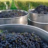 Gerog Fromm: Controllas da vin centralisadas muntan dapli lavur e dapli custs