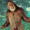24 - Bigfoot