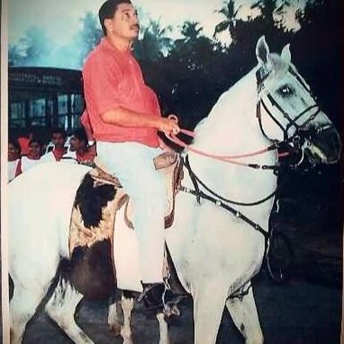 Cavalo Campário melhorou sua qualidade de vida após usar a Ortofibra