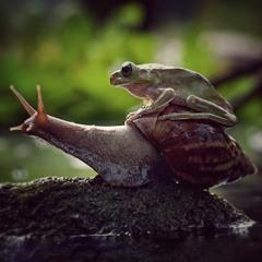 Slow (Real Slow VIP)
