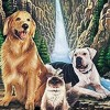 Homeward Bound the Incredible Journey Theme Song