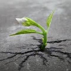 Grow ft. Depiction (prod. by D'artizt)