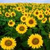 Make Our Garden Grow - SOP 1 And 2