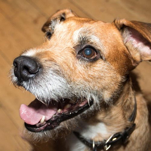 Starting With a Single Ripple - Wee Ginger Dug - 17th April 2017