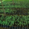 Kerala Plant Nursery - Metasouk Technologies Pvt Ltd
