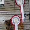 Stevie Nicks - Cat Champion At Royal Easter Show