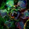 Massacre Neural V2 - Loading