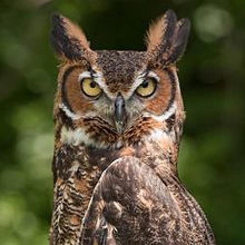 "Bird Seasons (Mvt. 1 - ""Winter Lullaby"" (owl calls))"