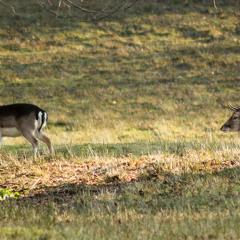 Deer Park Walk