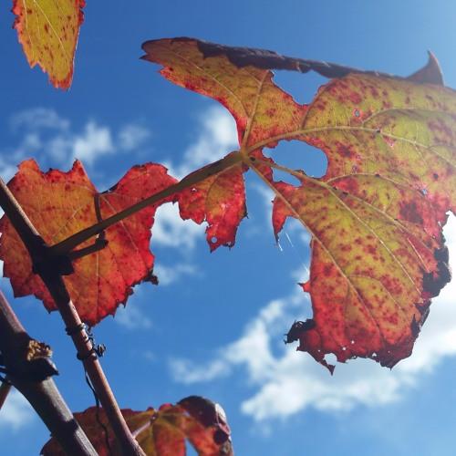 Autumn Sesshin 2017 - Dark of the Moon - Roshi Susan Murphy - Cloud Mountain