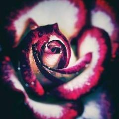 "Dj Astin Chapter III ""<Rose>"""