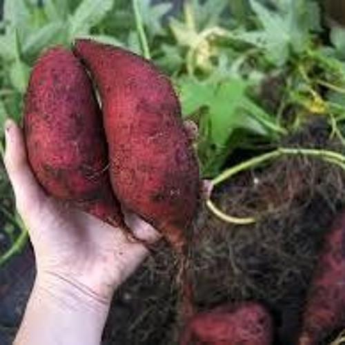 Alicia Schvartzman - Productora agroecológica de Basavilbaso, Entre Ríos