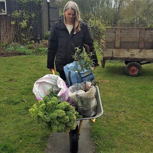 6: Grønt overskud - giv eller få gratis planter