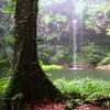 Rahatlatıcı Yağmur Ormanı Sesleri mp3