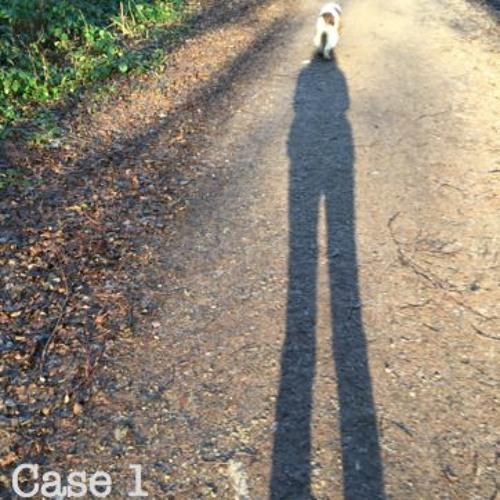 Case 1 - The dog, the Buddha nature