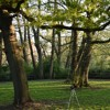 Download Dawn chorus at St Ann's Well Gardens, East Sussex Mp3