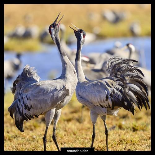 Eurasian Cranes Sound Library Preview
