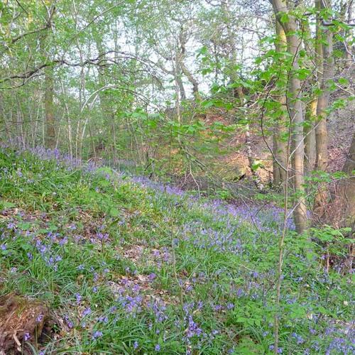 Gillfield Wood Song
