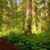 Earth Elemental Healing (432Hz) Music ~ Grounding, Growth, Prosperity, Strength