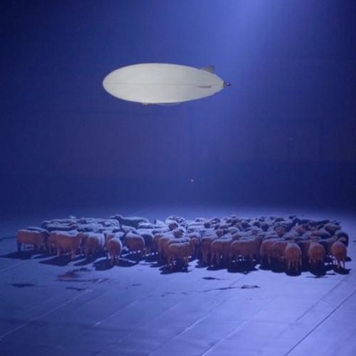 The Diva Sheep (Director's Cut)