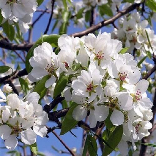 「ロシアの声」アーカイブから:今の季節、春を歌った曲を聴いてください。
