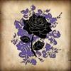 Sylvia's Rose