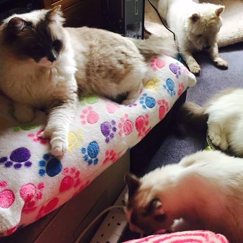 BBC Radio Stoke Therapy Cats Pkg