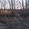 Spring Peepers Soundscapes 329 2017