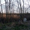 Spring Peepers Soundscapes 405 2017