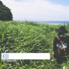 Koi (恋) - Hoshino Gen (Cover) ft. Ryric