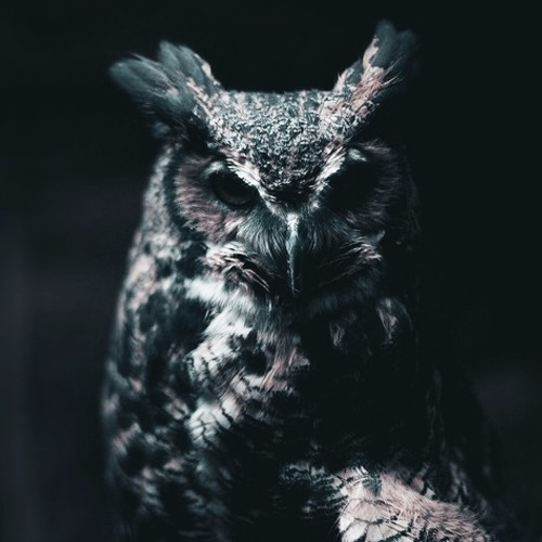 joyryde night owl radio by mixtapes free listening on soundcloud - Owl Picture
