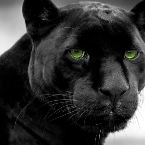 Rilke: Der Panther
