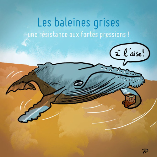 298 Les baleines